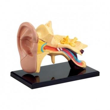 Набор для исследований Edu-Toys Модель анатомия уха сборная, 7,7 см