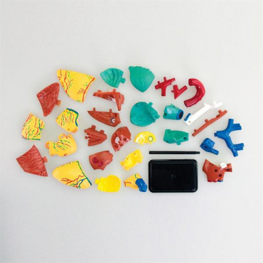 Набор для исследований Edu-Toys Модель сердца человека сборная, 14 см