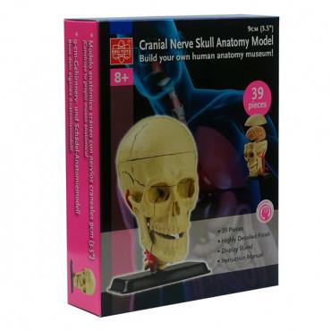 Набір для досліджень Edu-Toys Модель черепа з нервами збірна, 9 см